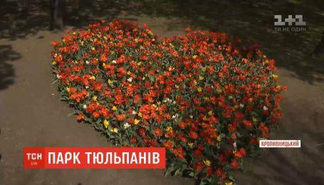 Более трех миллионов тюльпанов расцвели в Кропивницком