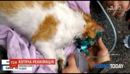 Кислород для кошек: в Италии пожарные спасли не только людей, но и животных