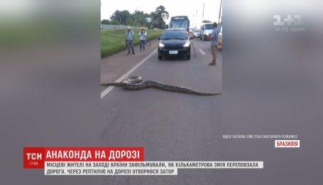 Несколькометровая анаконда стала причиной пробки на одной из автодорог на западе Бразилии