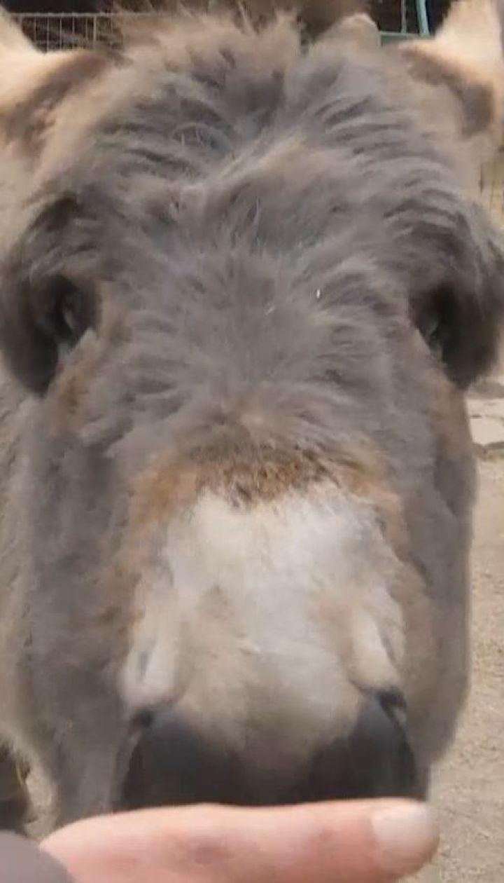 Від тварин у контактних зоопарках можна підчепити смертельні інфекції - Супрун
