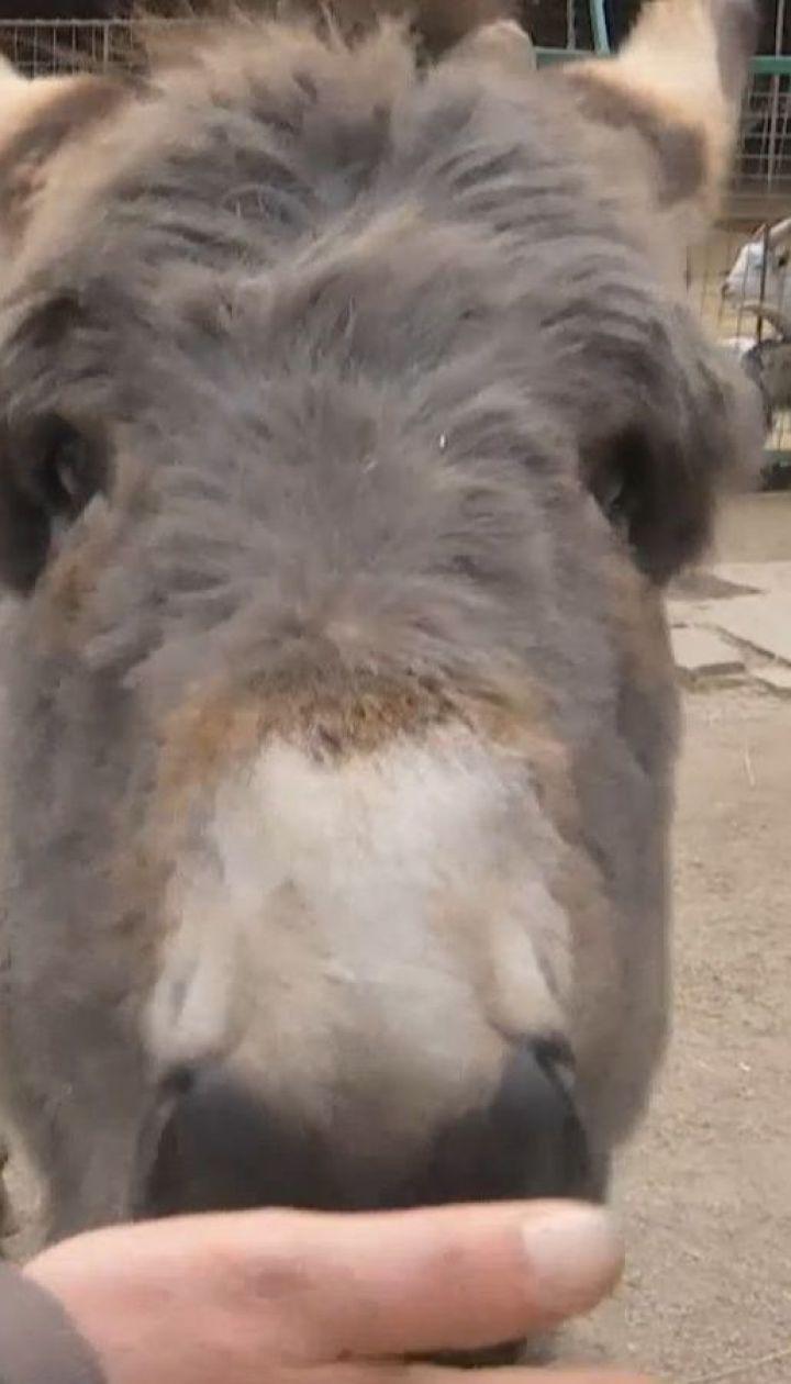 От животных в контактных зоопарках можно подцепить смертельные инфекции - Супрун