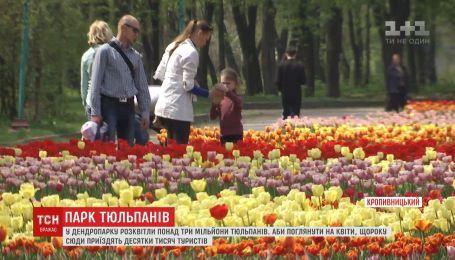 Туристы массово приезжают в Кропивницкий, чтобы посмотреть на миллионы цветущих тюльпанов