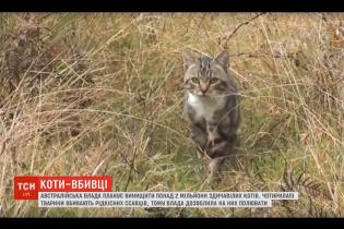 В Австралії борються зі здичавілими котами, які полюють на рідкісні види тварин