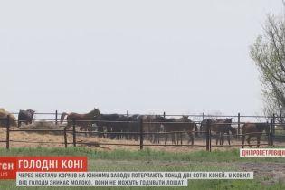 Концлагерем для лошадей стал завод, который раньше занимался разведением племенных пород