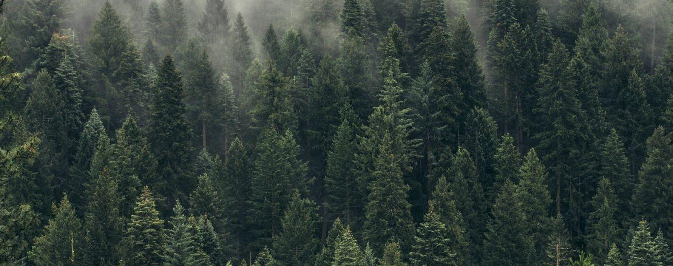"""Незаконне вирубування Карпатських лісів: Рада значно посилила відповідальність """"чорних лісорубів"""""""