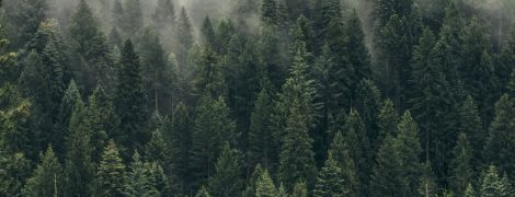 Вчені дослідили, що через зміни клімату дерева почали рости двічі швидше: чому так відбувається