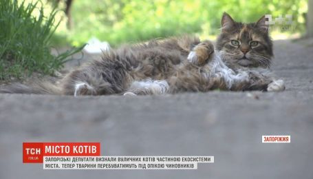 В Запорожье депутаты признали уличных котов частью экосистемы города
