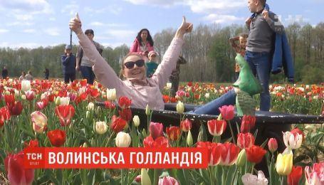 На Волыни фермер засадил цветами два гектара поля