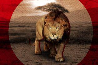 На экоферме в Африке за два дня убили более 50 львов. Рассказываем, что случилось