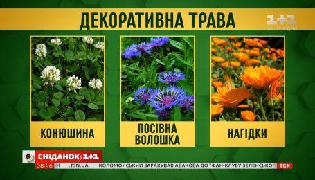 «Антивандальные» растения: какие цветы выбрать жителям многоэтажек