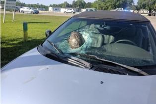 В Америке несчастная черепаха на скорости влетела в лобовое стекло легковика