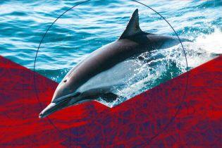 На узбережжі Франції масово знаходять мертвих дельфінів. Що є причиною загибелі тварин