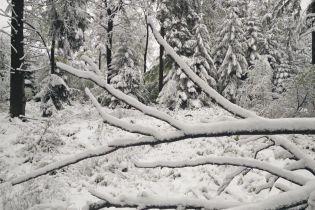 Юг Бельгии накрыл снегопад