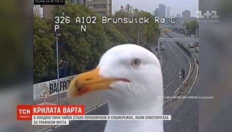 Работа мечты, чайки-часовые и хулиган разбил яйца: новости онлайн-трансляции