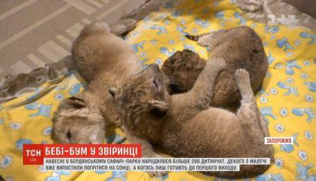 Напередодні великодніх свят у сафарі-парку Бердянська на світ з'явилися понад 200 малюків