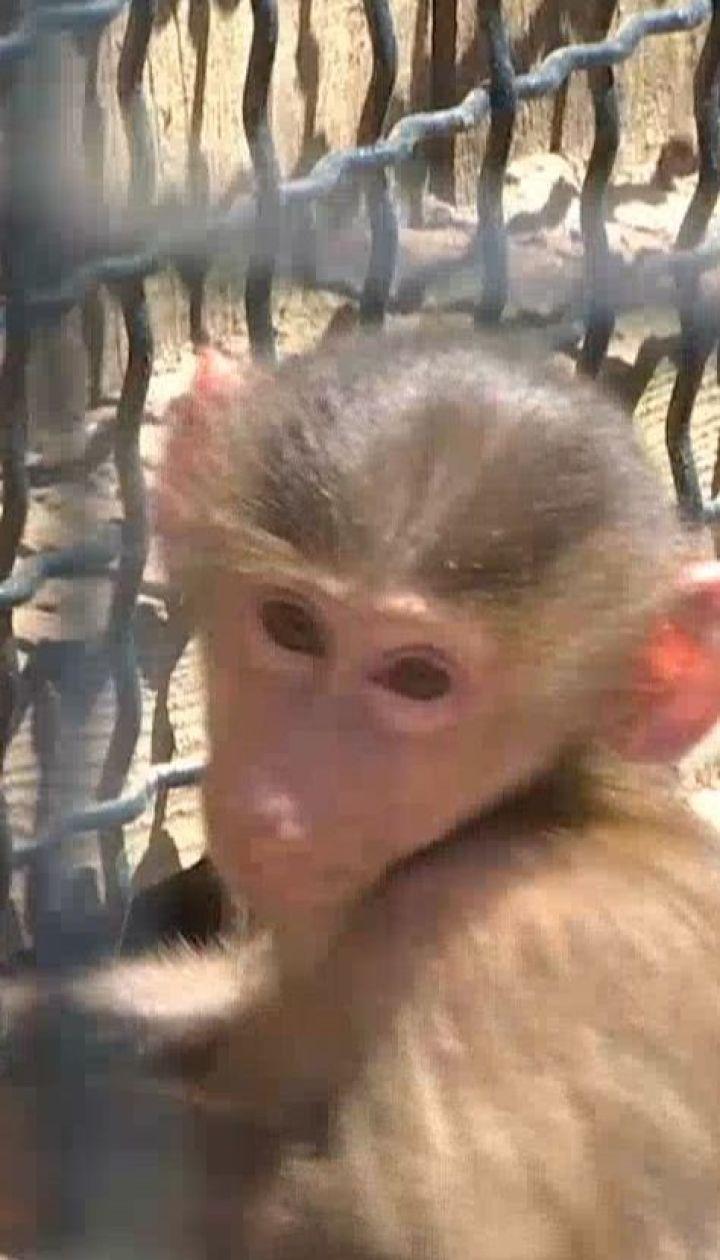 Настоящий весенний беби-бум произошел в Бердянском сафари-парке