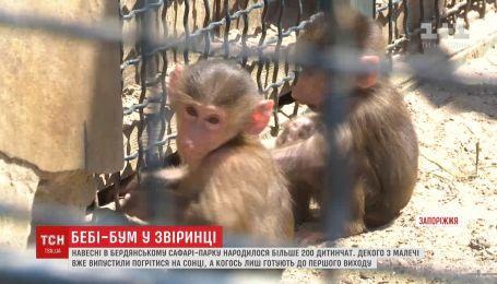 Справжній весняний бебі-бум трапився у Бердянському сафарі-парку