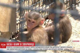 В бердянском зоопарке появилось более 200 маленьких зверят