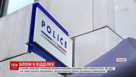 У Парижі довелося закрити поліцейський відділок через нашестя бліх