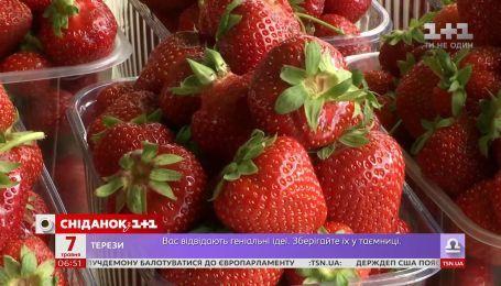 Сезон клубники на пороге: как выбрать качественные и вкусные ягоды