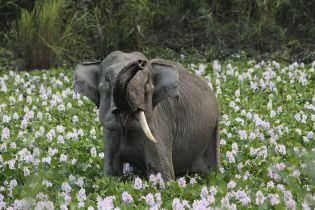 Під час антибраконьєрської операції британського рейнджера вбив слон