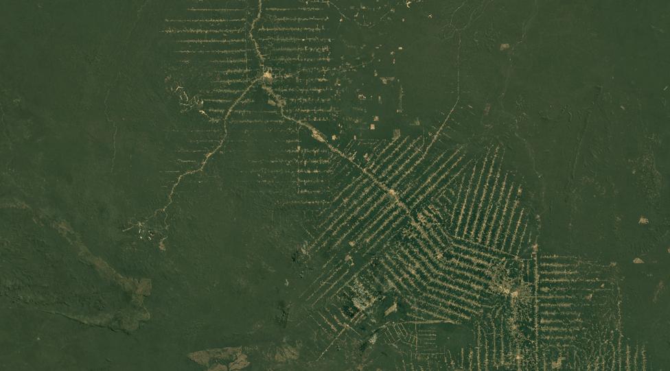 Масиви амазонського лісу