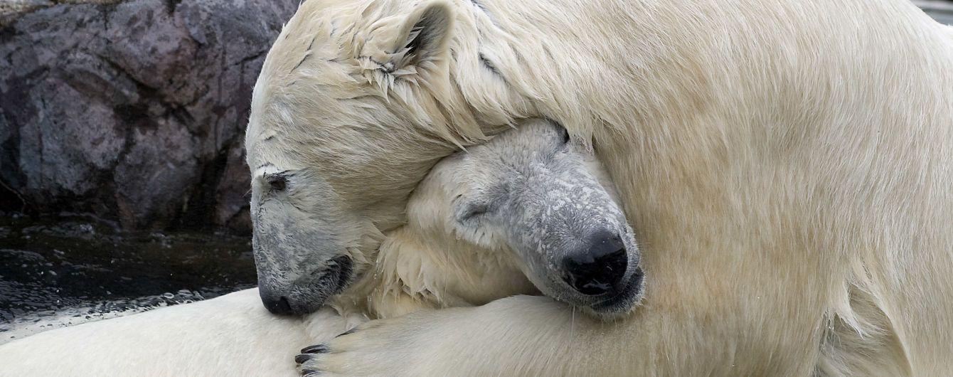 Миллионам животных и растений угрожает вымирание, люди тоже в опасности. Объясняем, почему