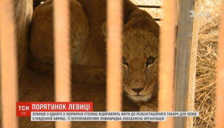 Левицю з України перевезуть у реабілітаційний центр ПАР