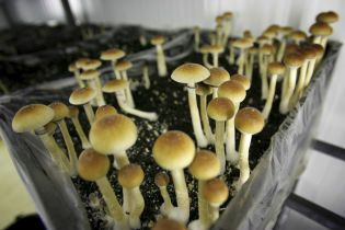 Денвер станет первым городом в США, в котором декриминализируют галлюциногенные грибы