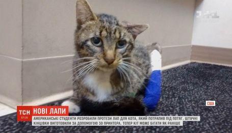 Американські інженери виготовили протези для кота