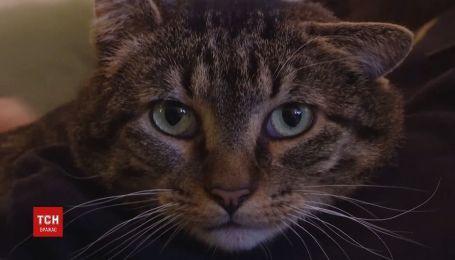 Нові лапки для кота розробили інженери в США