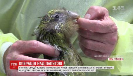 У Новій Зеландії вперше у світі прооперували мозок рідкісного папуги какапо
