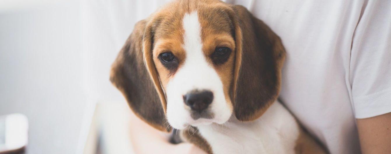 Розмовляти з тваринами - корисно для здоров'я, вважають експерти