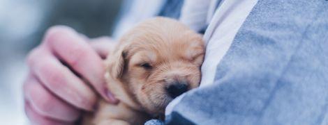 """Не один год за семь: исследователи представили формулу для """"перевода"""" собачьего возраста в человеческий"""