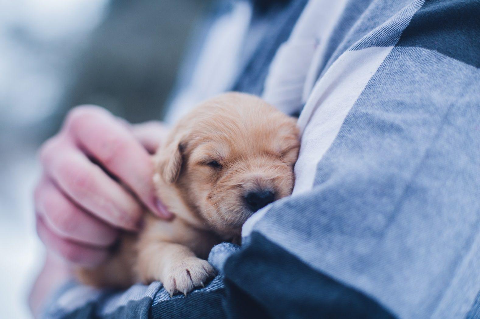 домашние животныe собака