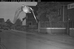 Голубь-лихач попал на штраф за превышение скорости в Германии