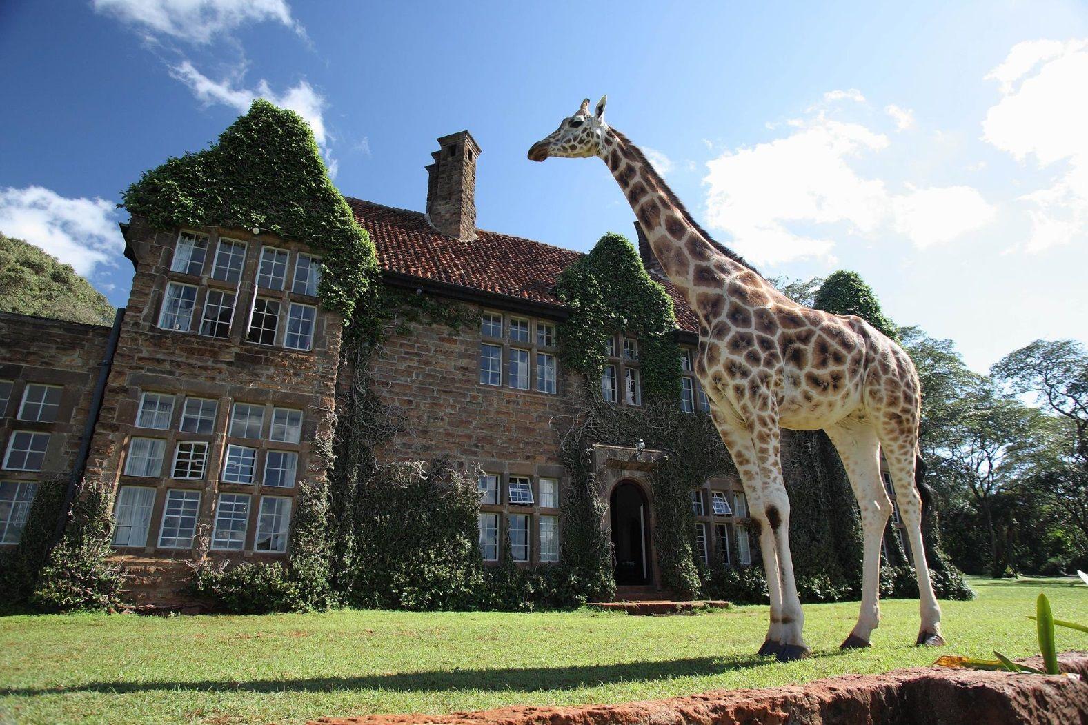 готель Giraffe Manorу Кенії
