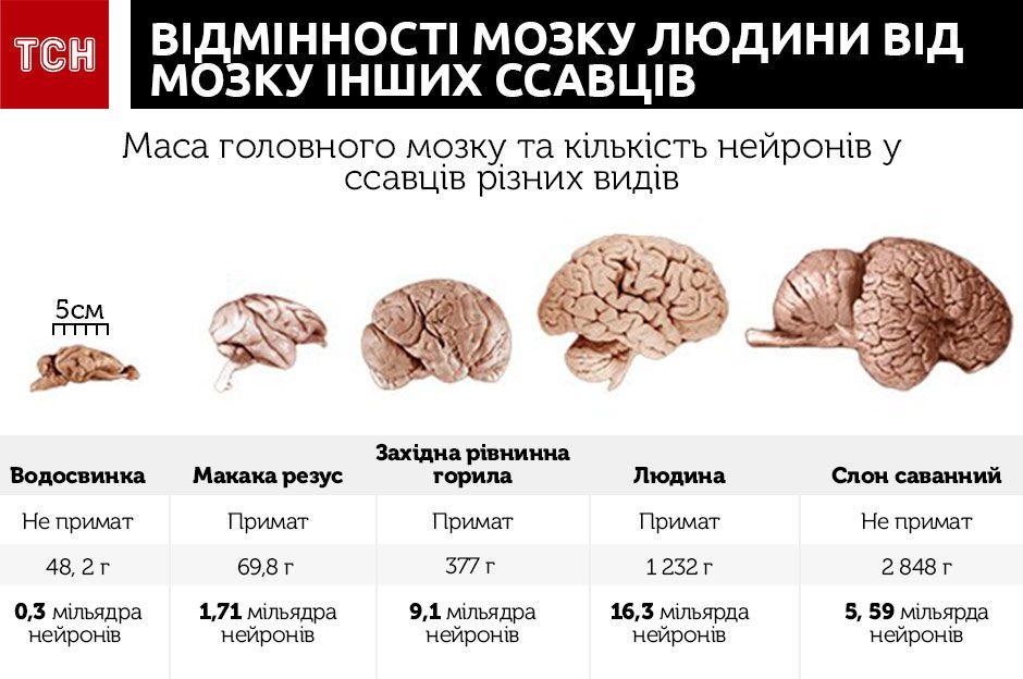 мозок фармак іг
