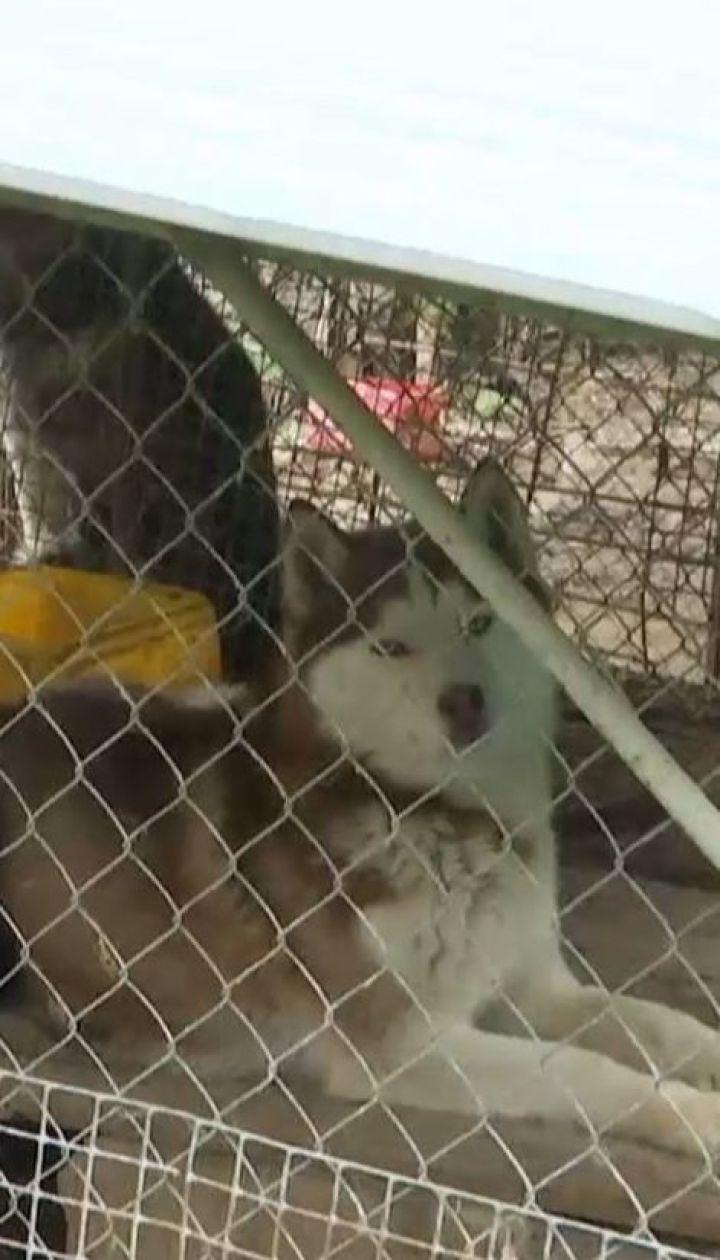 Собачий могильник просто неба: у приватному розпліднику виявили тіла тварин