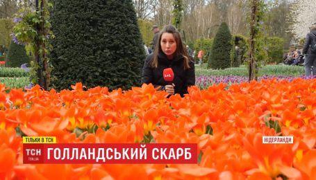 Голландський скарб: як нідерландці збудували квіткову імперію