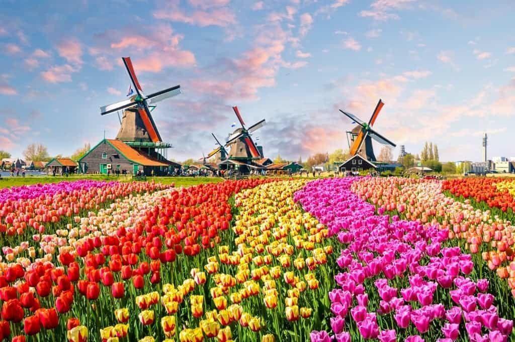 Нидерланды тюльпаны