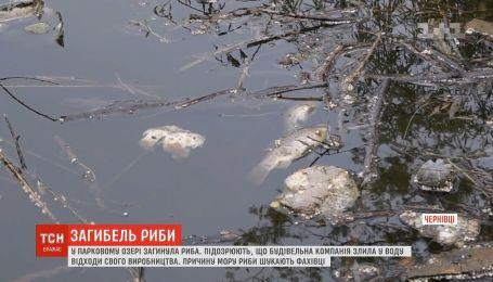 Рыба массово погибла в парковом озере Черновцов