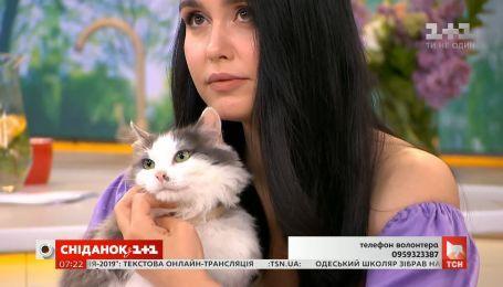 Кішечки Ася та Кіра шукають родину