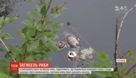Мор риби стався у Чернівцях: містяни нарікають на будівельну компанію