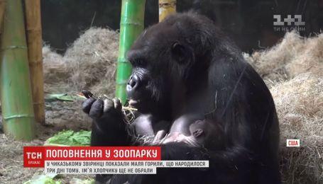 В чикагском зоопарке показали малыша гориллы