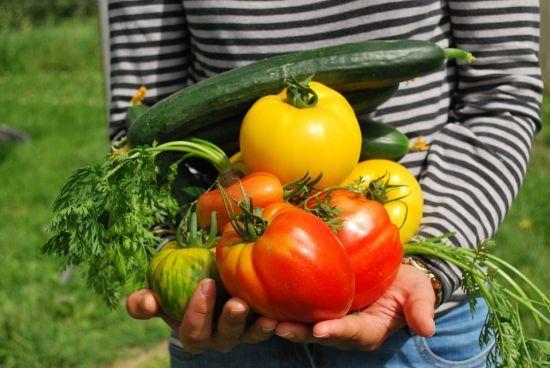 """Ціни на овочі """"кусаються"""": де в Україні найдорожчі помідори та коли подешевшають огірки"""