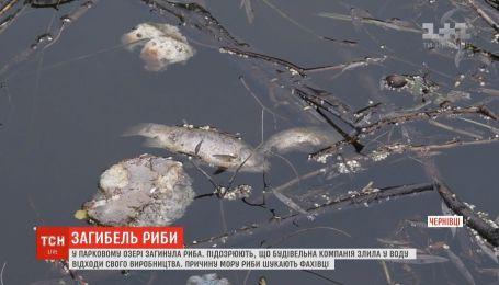 Жители Черновцов обвиняют строителей в массовом море рыбы в парковом озере