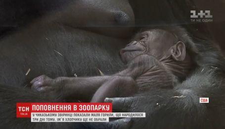 В зоопарке Чикаго показали малыша гориллы, которое родилось в Международный праздник матери