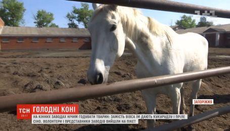На украинских конезаводах нечем кормить поголовье