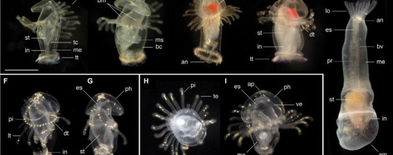 У берегов Панамы биологи обнаружили морские личинки и не знают, что из них вырастет